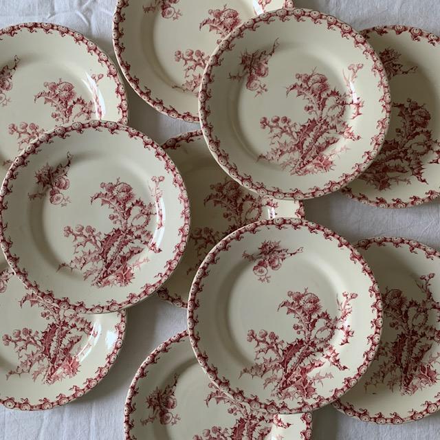 Assiettes plates chardons